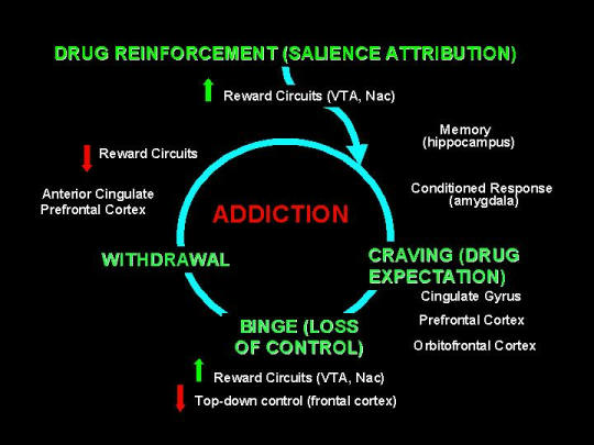 The addiction cycle is the same for all drugs